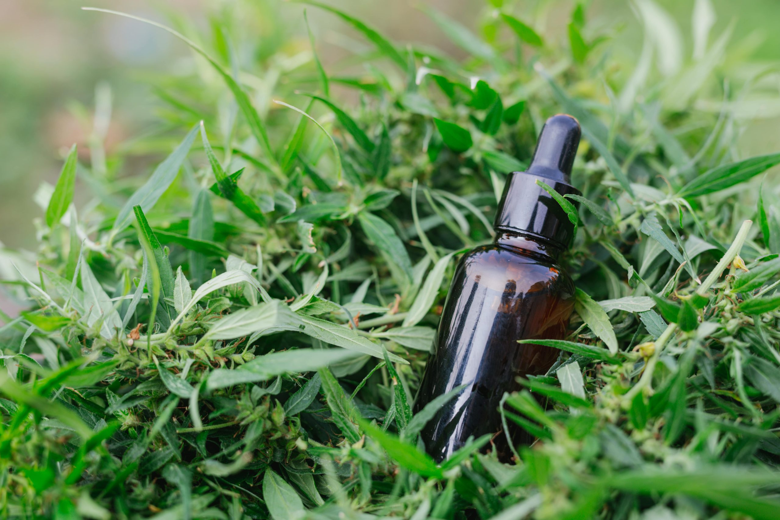 How long does cbd stays in your system
